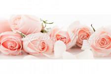 Фартук для кухни ABS. Цветы 96 Нежные розы