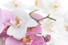 Фартук для кухни 36 Цветы ветка орхидеи