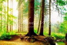 Фартук для кухни Просторы 41 Зеленый лес 2